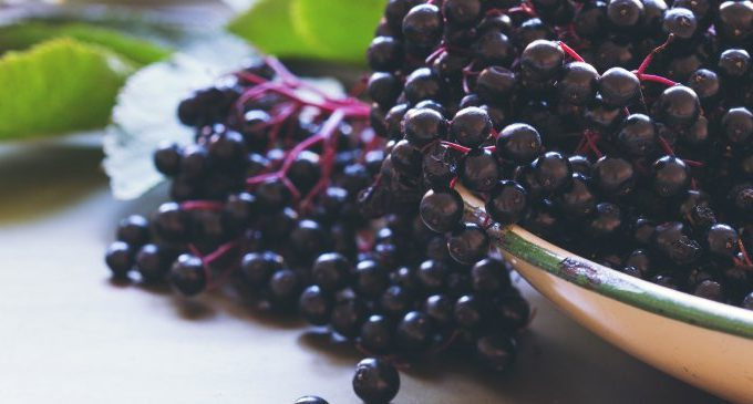 Elderberry: Natural Medicine For Colds, Flus, Allergies & More